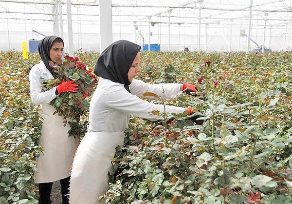 7 هزار هکتار گل و گیاه زینتی از بین رفت