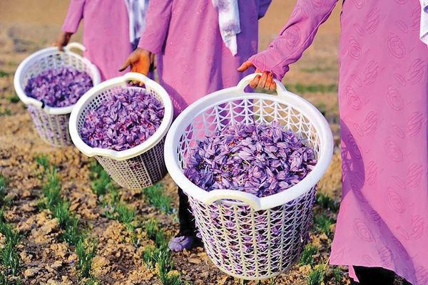 تخریب ارزی کانال صادرات زعفران