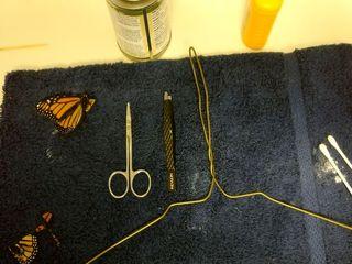 جراحی پروانه