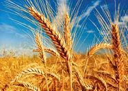 نه کیفیت گندم پایین است نه قیمت آن بالا