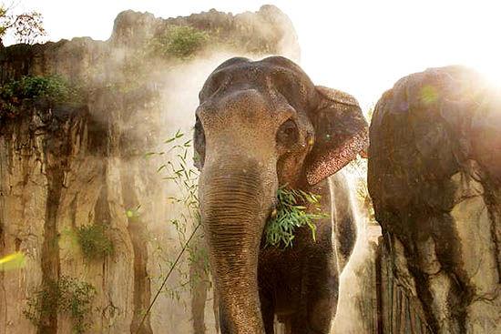 مرگ پیرترین فیل نر آسیایی