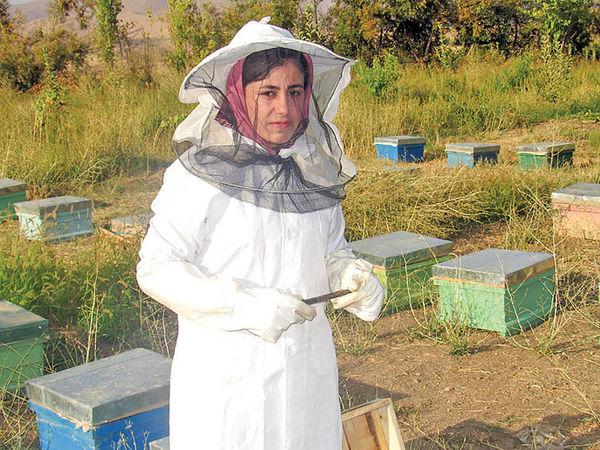 صادرات عسل صفر شد