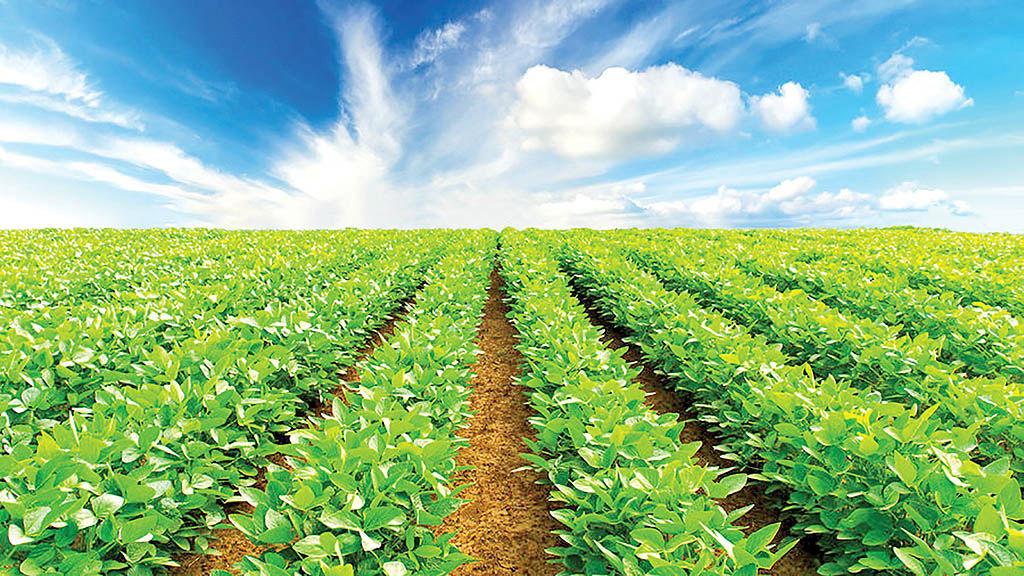 تصویر تجاری موادغذایی در اول پاییز