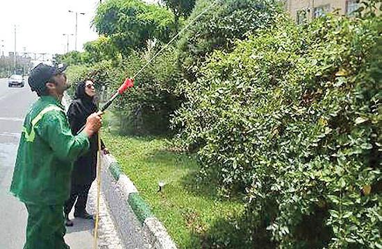 محلول پاشی درختان منطقه 21 تهران با کود آمینو کلاته آهندار