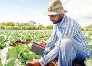تکنولوژی هوش مصنوعی در دستان کشاورزان خرد