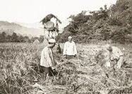 صدور محصولات کشاورزی به روسیه